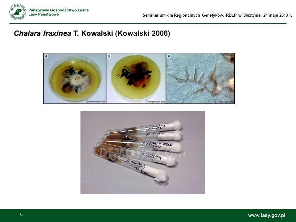 6 Chalara fraxinea T. Kowalski Chalara fraxinea T. Kowalski (Kowalski 2006) Seminarium dla Regionalnych Genetyków, RDLP w Olsztynie, 24 maja 2013 r.