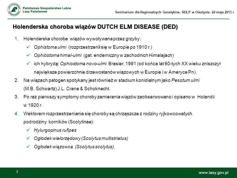 7 Holenderska choroba wiązów DUTCH ELM DISEASE (DED) 1.Holenderska choroba wiązów wywoływana przez grzyby: Ophistoma ulmi (rozprzestrzenił się w Europ