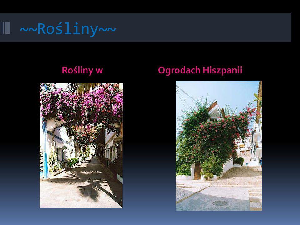 ~~Rośliny~~ Rośliny wOgrodach Hiszpanii