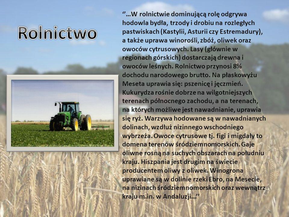 …W rolnictwie dominującą rolę odgrywa hodowla bydła, trzody i drobiu na rozległych pastwiskach (Kastylii, Asturii czy Estremadury), a także uprawa winorośli, zbóż, oliwek oraz owoców cytrusowych.