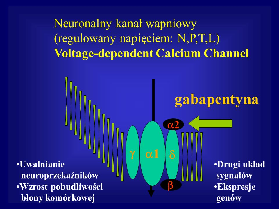 1 2 Neuronalny kanał wapniowy (regulowany napięciem: N,P,T,L) Voltage-dependent Calcium Channel Uwalnianie neuroprzekaźników Wzrost pobudliwości błony
