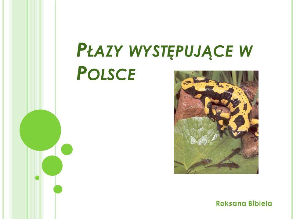 P ŁAZY WYSTĘPUJĄCE W P OLSCE Roksana Bibiela