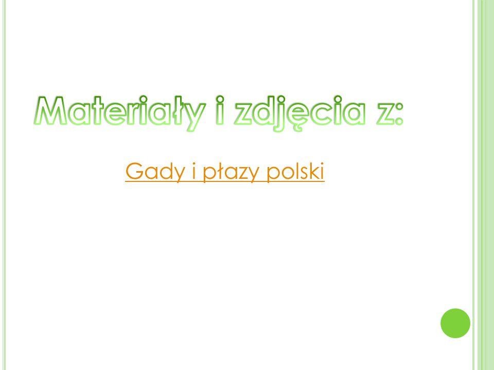 Gady i płazy polski