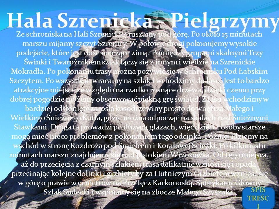 Hala Szrenicka - Pielgrzymy Ze schroniska na Hali Szrenickiej ruszamy pod górę. Po około 15 minutach marszu mijamy szczyt Szrenicy. W połowie drogi po