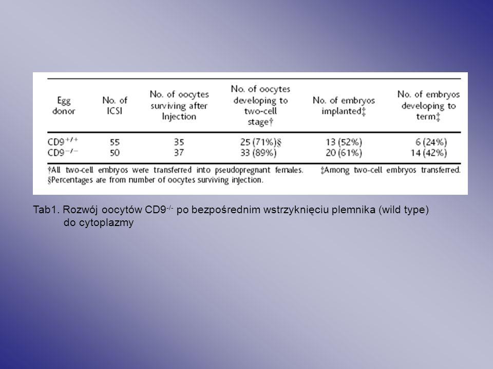 Oocyty CD9-/- obniżona ilość zapłodnień in vitro zdrowe potomstwo samic CD-/- in vivo CD9 jest istotne dla interakcji plemnik-komórka jajowa NIE WPŁYW