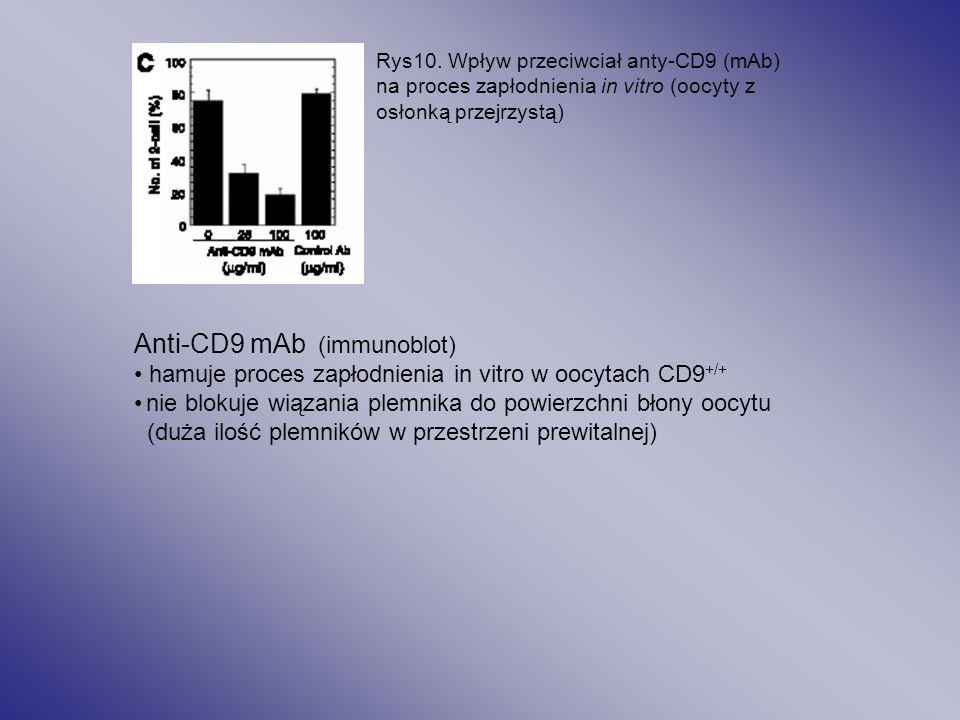 Tab1. Rozwój oocytów CD9 -/- po bezpośrednim wstrzyknięciu plemnika (wild type) do cytoplazmy