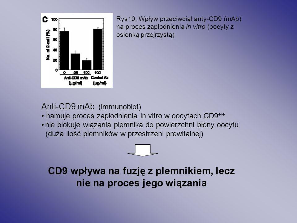 Rys10. Wpływ przeciwciał anty-CD9 (mAb) na proces zapłodnienia in vitro (oocyty z osłonką przejrzystą) Anti-CD9 mAb (immunoblot) hamuje proces zapłodn