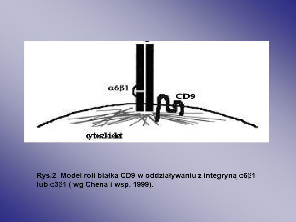 CD9: integralne, transbłonowe białko występujące m.in. w błonie plazmatycznej oocytu i plemnika należy do rodziny białek TM4 (tetraspan-membrane prote