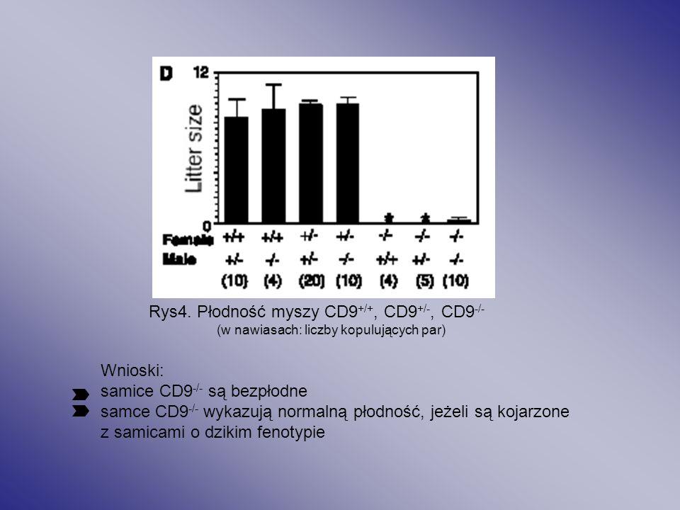 Dysrupcja genu CD9 : Rys3. Obraz cytometrii przepływowej dla komórek szpiku kostnego z zastosowaniem przeciwciał anty-CD9 Myszy CD9 -/- prawidłowy roz