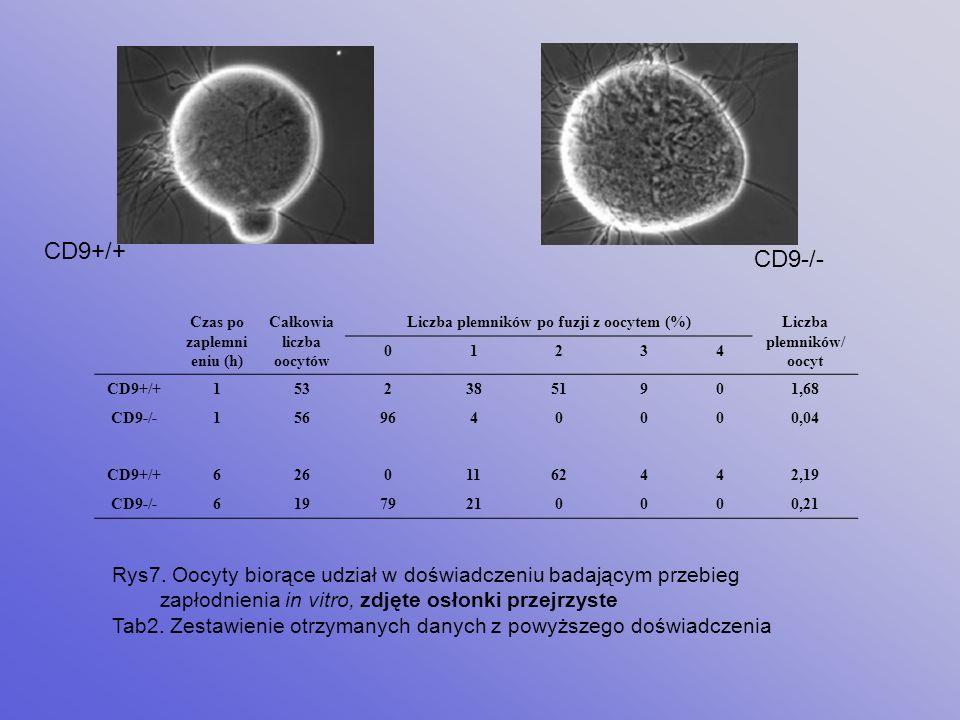 Całkowita liczba oocytów (%) Brak zapłodnienia (%) Zapłodnienie Zdegenerowało (%) Penetracja osłonki przejrzystej (%) Przedjądrza (%) CD9+/+179 (100)6