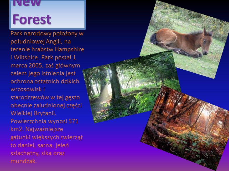 New Forest Park narodowy położony w południowej Anglii, na terenie hrabstw Hampshire i Wiltshire. Park postał 1 marca 2005, zaś głównym celem jego ist