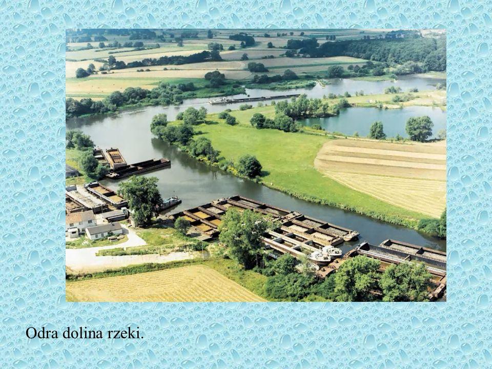 Główne rzeki RzekaDługość całkowita Długość w Polsce Powierzchni a całkowita Powierzchni a w Polsce Wisła1047 km 194,3 tys. km 2 168,6 tys. km 2 Odra8