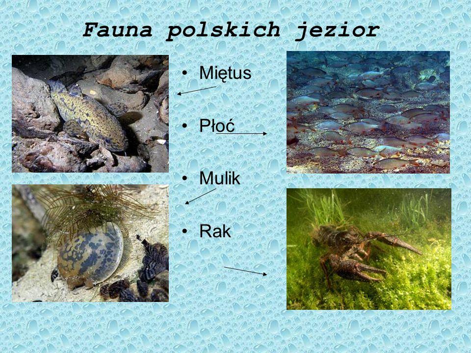 Flora polskich jezior Grążel żółty Rdestnica połyskująca Rdest ziemnowodny Jaskier wodny Strzałka wodna