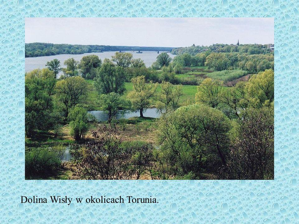Charakterystyka rzek Sieć rzeczna Polski jest asymetryczna- spowodowane jest to ogólnym nachyleniem powierzchni kraju ku pn.-zach. oraz z rozwojem rze