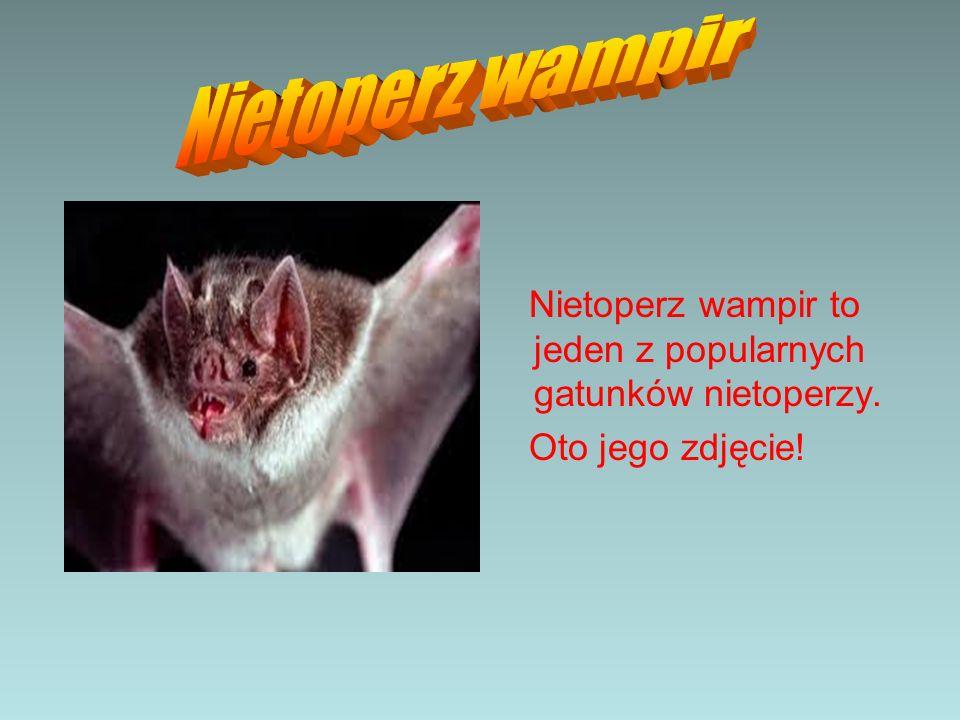 Nietoperz wampir to jeden z popularnych gatunków nietoperzy. Oto jego zdjęcie!