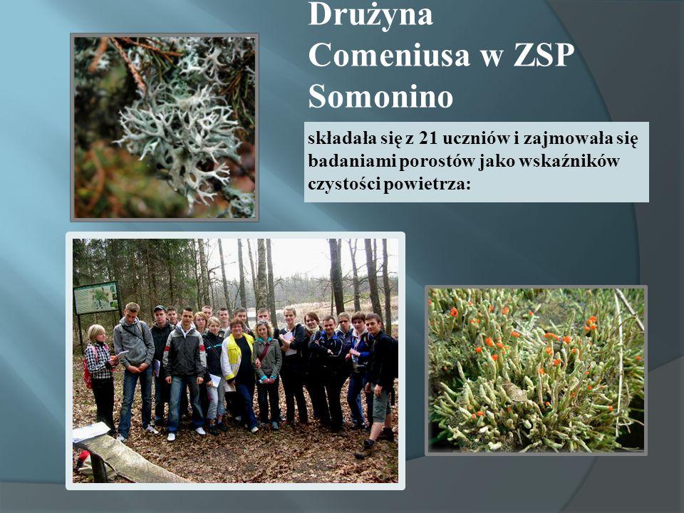 Drużyna Comeniusa w ZSP Somonino składała się z 21 uczniów i zajmowała się badaniami porostów jako wskaźników czystości powietrza: