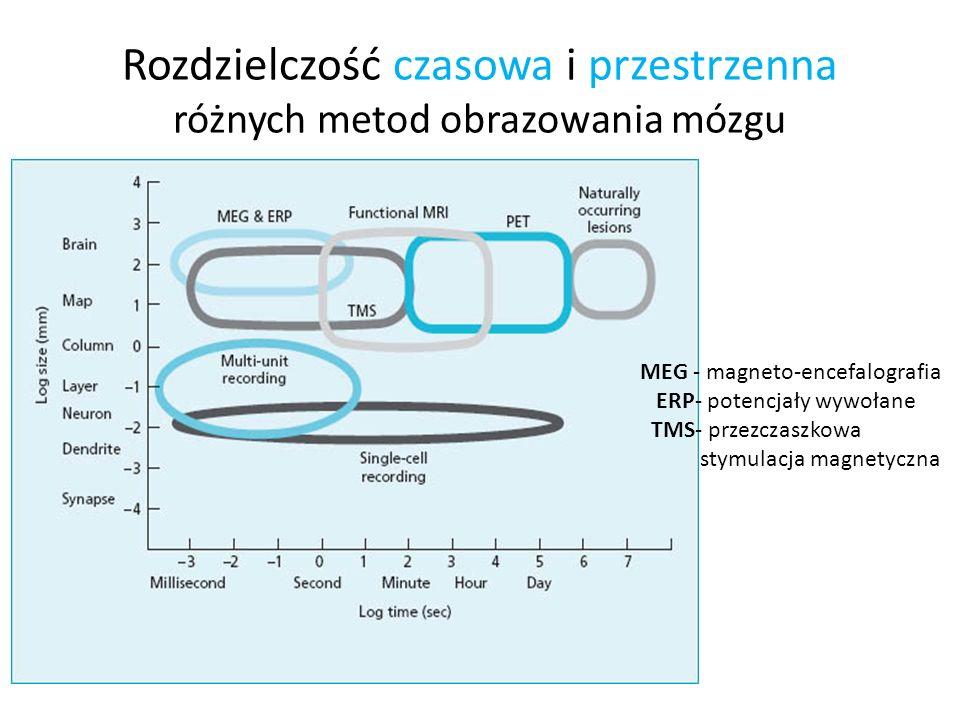 Rozdzielczość czasowa i przestrzenna różnych metod obrazowania mózgu MEG - magneto-encefalografia ERP- potencjały wywołane TMS- przezczaszkowa stymula