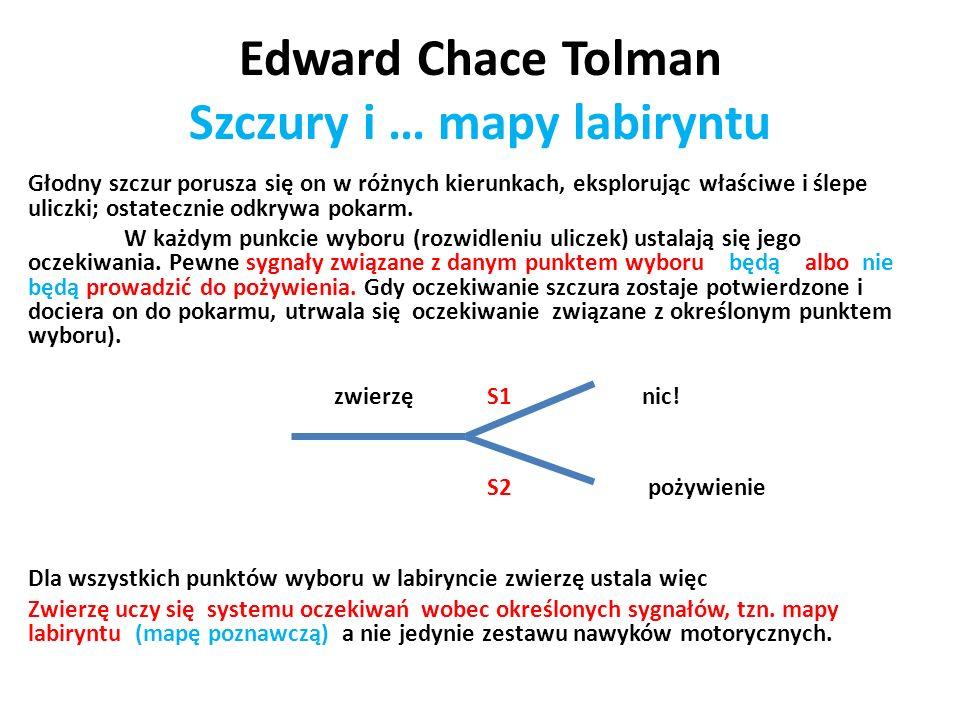 Edward Chace Tolman Szczury i … mapy labiryntu Głodny szczur porusza się on w różnych kierunkach, eksplorując właściwe i ślepe uliczki; ostatecznie od