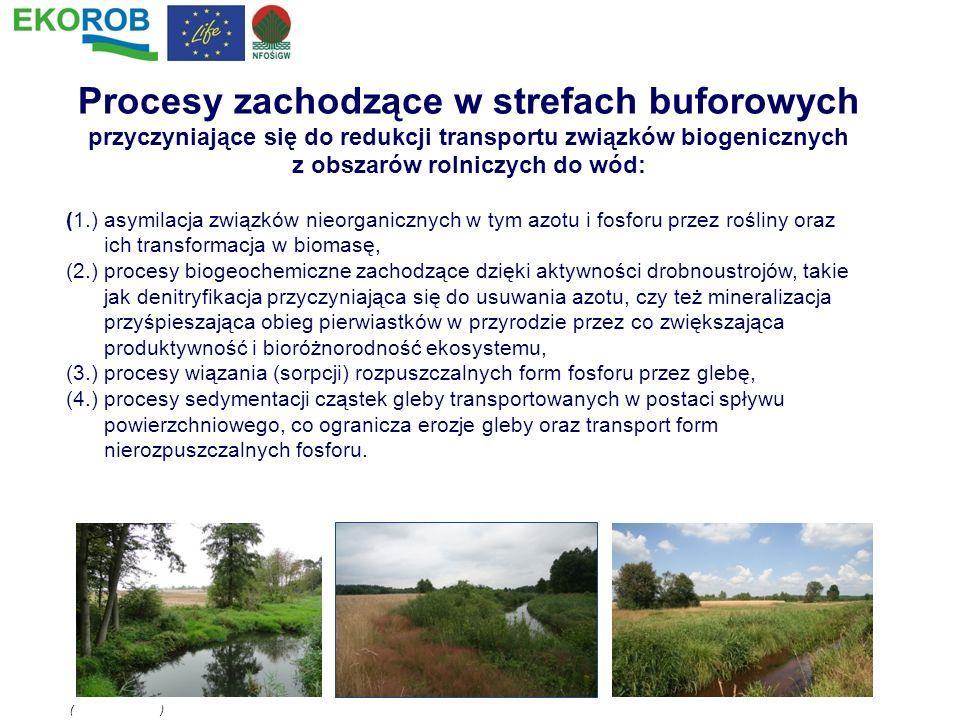 (1.) asymilacja związków nieorganicznych w tym azotu i fosforu przez rośliny oraz ich transformacja w biomasę, (2.) procesy biogeochemiczne zachodzące
