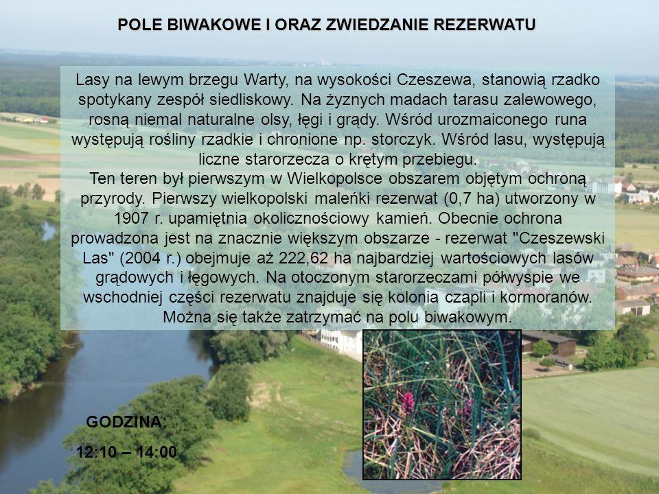 POLE BIWAKOWE I ORAZ ZWIEDZANIE REZERWATU GODZINA: 12:10 – 14:00 Lasy na lewym brzegu Warty, na wysokości Czeszewa, stanowią rzadko spotykany zespół s