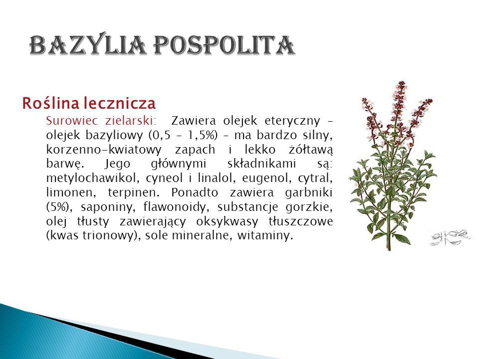 Roślina lecznicza Surowiec zielarski: Zawiera olejek eteryczny – olejek bazyliowy (0,5 – 1,5%) – ma bardzo silny, korzenno-kwiatowy zapach i lekko żół