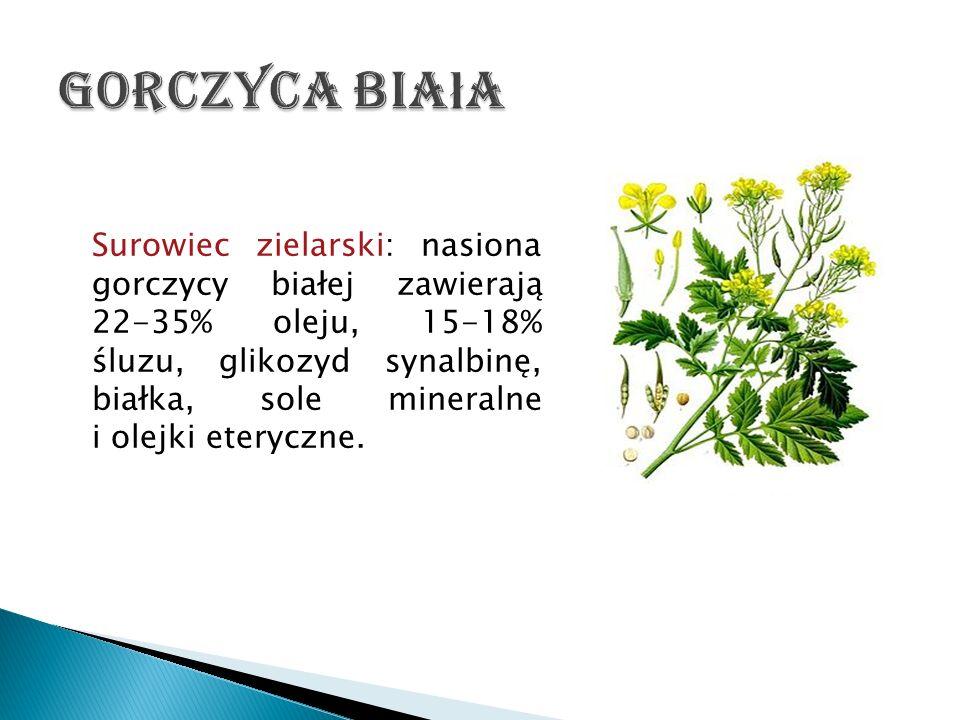 Surowiec zielarski: nasiona gorczycy białej zawierają 22-35% oleju, 15-18% śluzu, glikozyd synalbinę, białka, sole mineralne i olejki eteryczne.