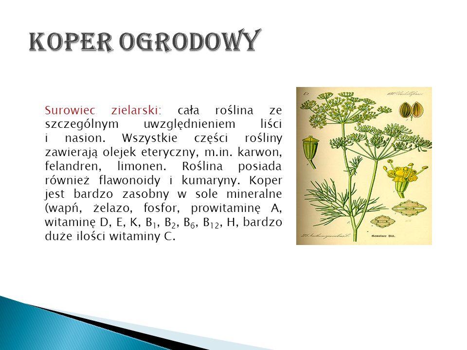 Surowiec zielarski: cała roślina ze szczególnym uwzględnieniem liści i nasion. Wszystkie części rośliny zawierają olejek eteryczny, m.in. karwon, fela
