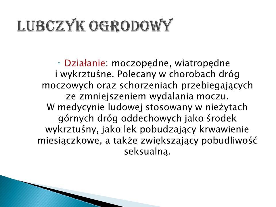 Działanie: moczopędne, wiatropędne i wykrztuśne. Polecany w chorobach dróg moczowych oraz schorzeniach przebiegających ze zmniejszeniem wydalania mocz