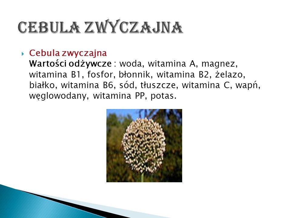 Cebula zwyczajna Wartości odżywcze : woda, witamina A, magnez, witamina B1, fosfor, błonnik, witamina B2, żelazo, białko, witamina B6, sód, tłuszcze,