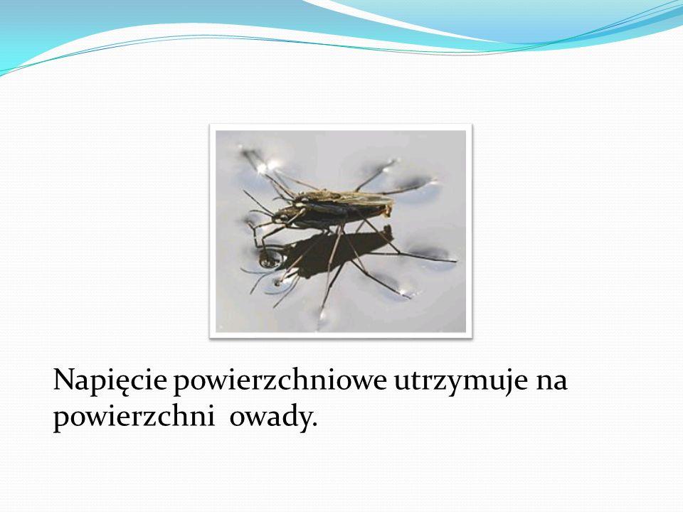 Napięcie powierzchniowe utrzymuje na powierzchni owady.