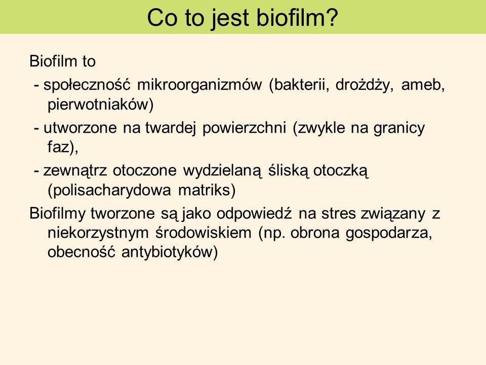 Biofilm to - społeczność mikroorganizmów (bakterii, drożdży, ameb, pierwotniaków) - utworzone na twardej powierzchni (zwykle na granicy faz), - zewnąt