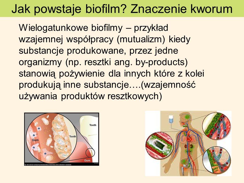 Jak powstaje biofilm? Znaczenie kworum Wielogatunkowe biofilmy – przykład wzajemnej współpracy (mutualizm) kiedy substancje produkowane, przez jedne o