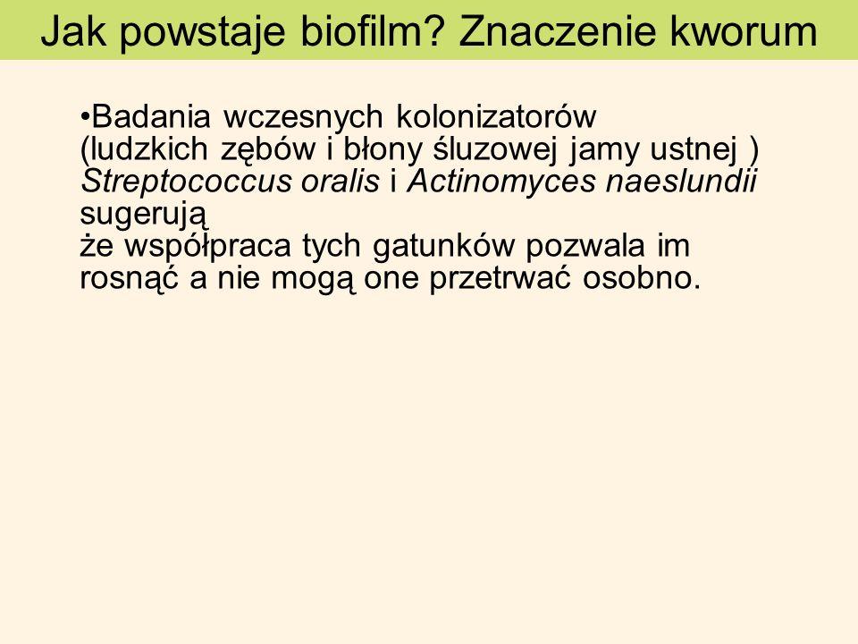Jak powstaje biofilm? Znaczenie kworum Badania wczesnych kolonizatorów (ludzkich zębów i błony śluzowej jamy ustnej ) Streptococcus oralis i Actinomyc