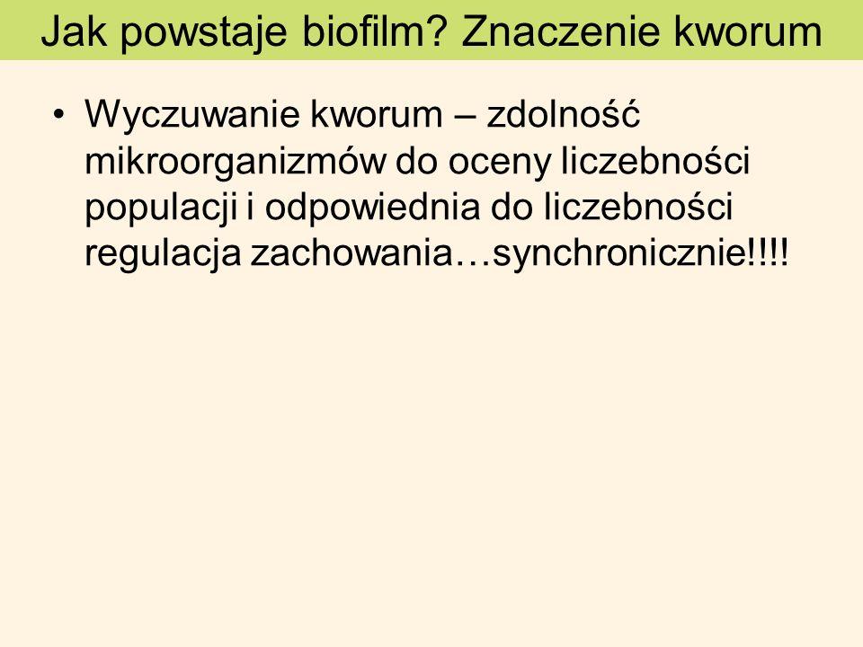 Wyczuwanie kworum – zdolność mikroorganizmów do oceny liczebności populacji i odpowiednia do liczebności regulacja zachowania…synchronicznie!!!! Jak p