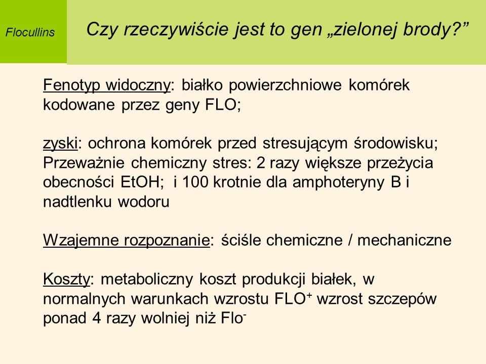 Flocullins Czy rzeczywiście jest to gen zielonej brody? Fenotyp widoczny: białko powierzchniowe komórek kodowane przez geny FLO; zyski: ochrona komóre