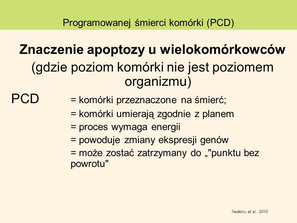 Znaczenie apoptozy u wielokomórkowców (gdzie poziom komórki nie jest poziomem organizmu) PCD = komórki przeznaczone na śmierć; = komórki umierają zgod