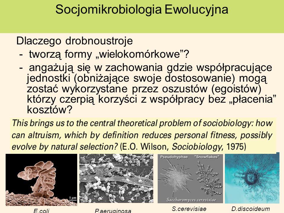 1.Wady i zalety mikroorganizmów wykorzystywane w badaniach zachowań socjalnych 2.Podział zachowań socjalnych 3.Przykłady zachowań socjalnych mikroorganizmów: wyczuwanie kworum – (ang.quorum sensing) biofilmy produkcja dobr publicznych geny zielonej brody produkcja toksyn apoptoza - programowana śmierć jednokomórkowców PLAN dalszej części wykładu: