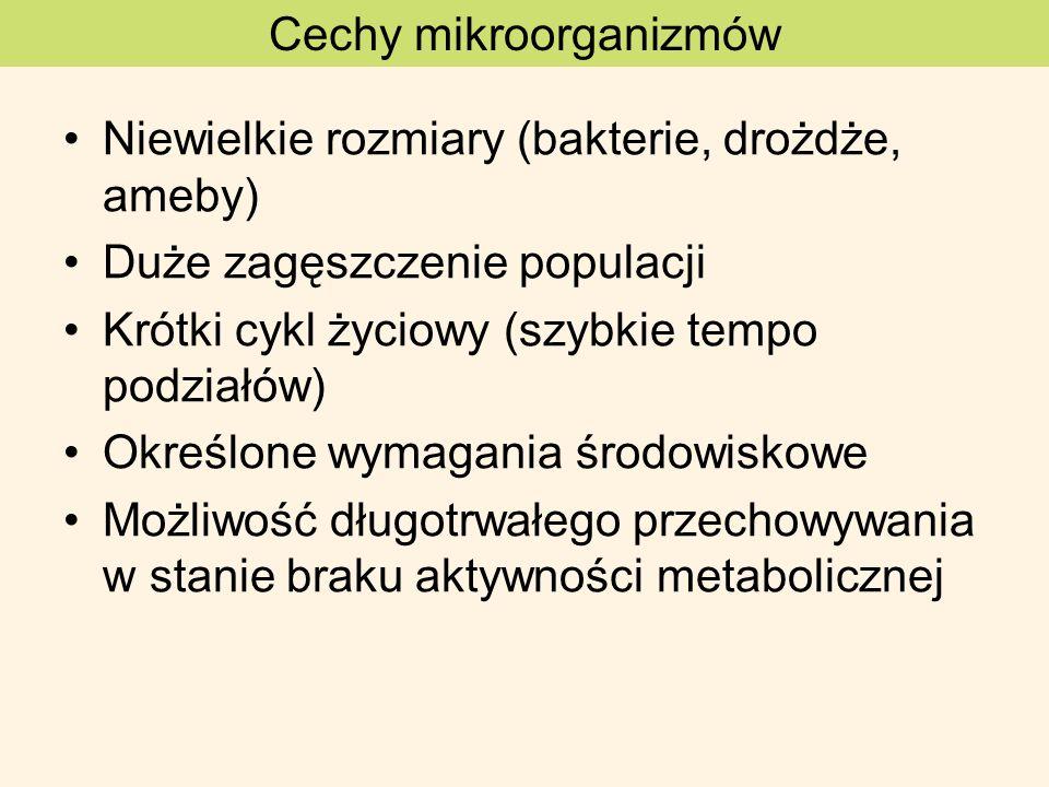 Cechy mikroorganizmów Niewielkie rozmiary (bakterie, drożdże, ameby) Duże zagęszczenie populacji Krótki cykl życiowy (szybkie tempo podziałów) Określo