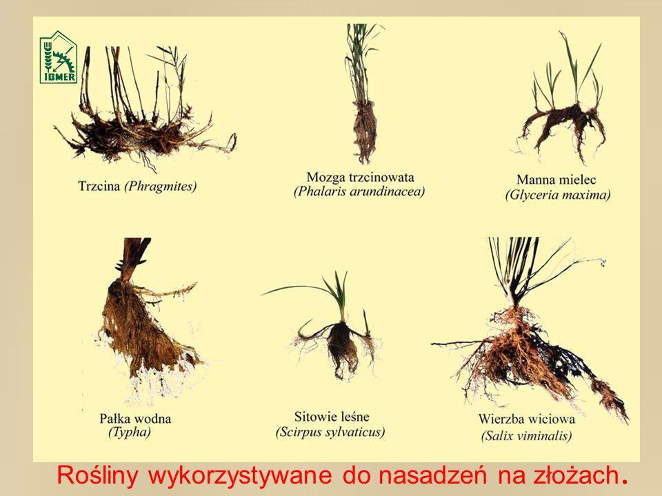 Rośliny wykorzystywane do nasadzeń na złożach.