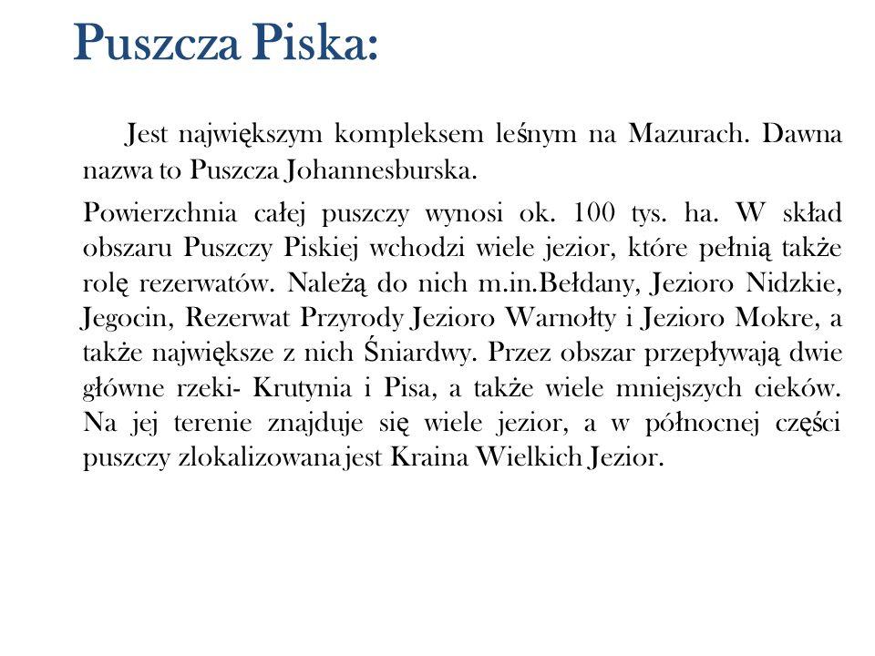 Puszcza Piska: Jest najwi ę kszym kompleksem le ś nym na Mazurach. Dawna nazwa to Puszcza Johannesburska. Powierzchnia ca ł ej puszczy wynosi ok. 100