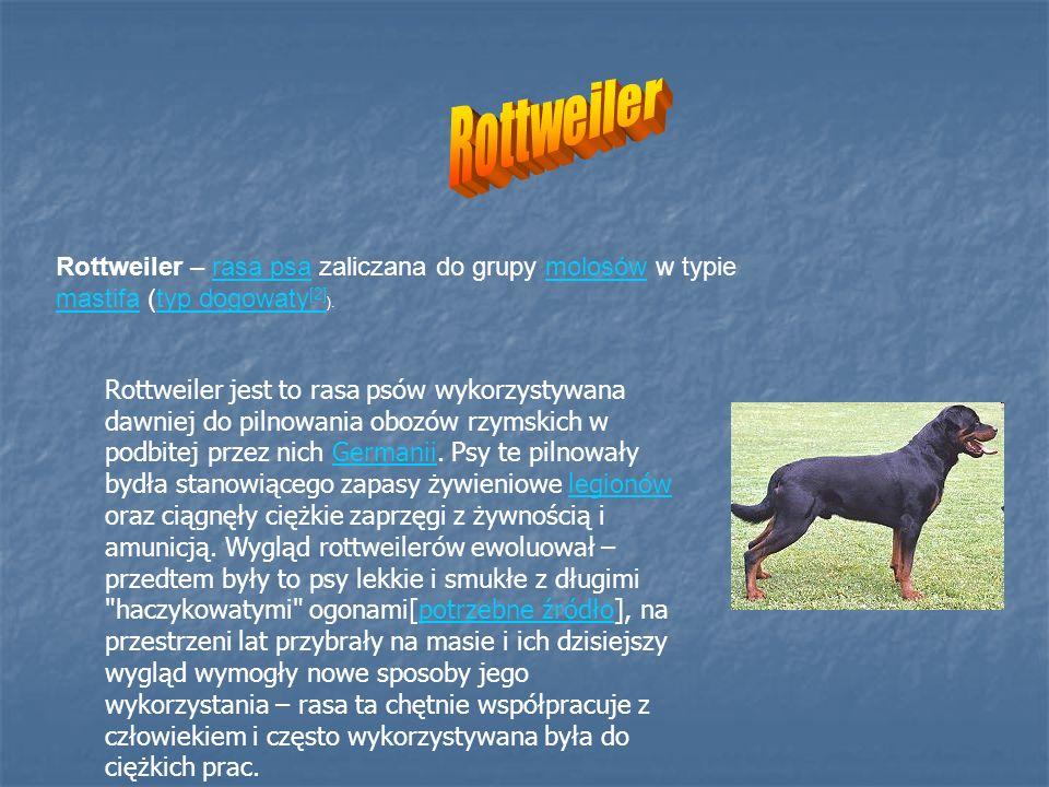 Rottweiler – rasa psa zaliczana do grupy molosów w typie mastifa (typ dogowaty [2] ).rasa psamolosów mastifatyp dogowaty [2] Rottweiler jest to rasa p
