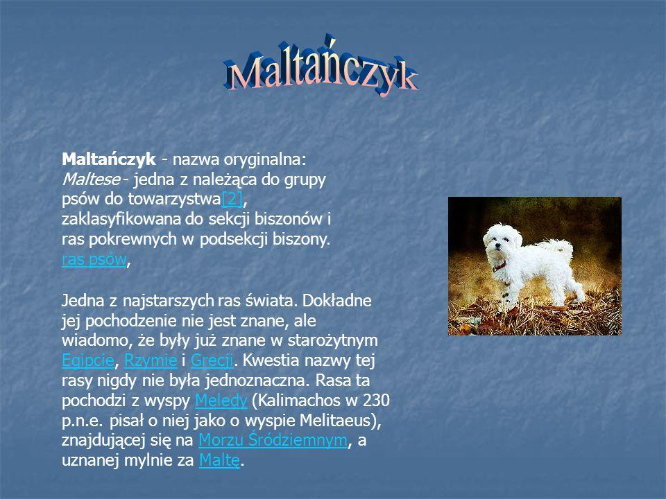 Bernardyn – rasa psa zaliczana co najmniej od XVII wieku, wyhodowana przez szwajcarskich mnichów do pełnienia funkcji psa pociągowego i psa- towarzysza.