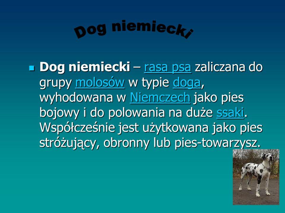 Dog niemiecki – rasa psa zaliczana do grupy molosów w typie doga, wyhodowana w Niemczech jako pies bojowy i do polowania na duże ssaki. Współcześnie j