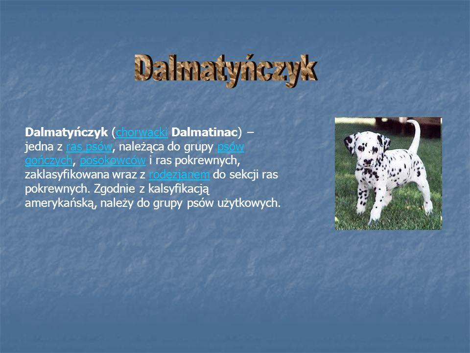 Dalmatyńczyk (chorwacki Dalmatinac) jedna z ras psów, należąca do grupy psów gończych, posokowców i ras pokrewnych, zaklasyfikowana wraz z rodezjanem
