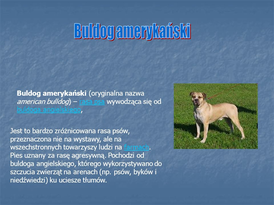 Buldog angielski – rasa psa zaliczana do grupy molosów, wyhodowana w XVIII wieku w Anglii, użytkowana jako pies do towarzystwa i odstraszający.rasa psamolosówXVIII wiekuAnglii Buldogi angielskie to stara rasa wywodząca się z linii buldogów.