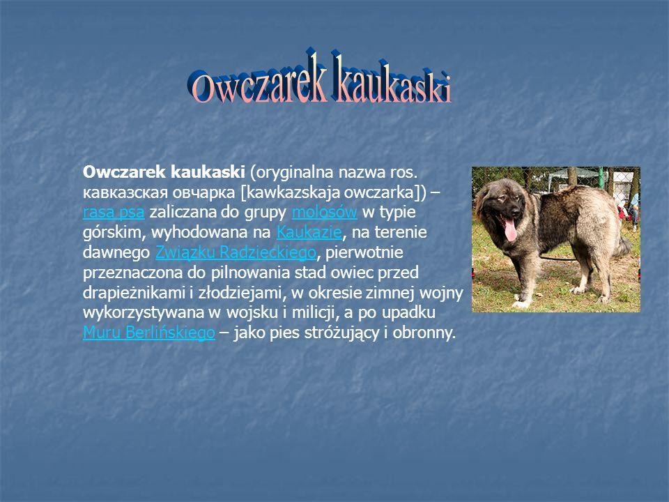 Owczarek kaukaski (oryginalna nazwa ros. кавказская овчарка [kawkazskaja owczarka]) – rasa psa zaliczana do grupy molosów w typie górskim, wyhodowana