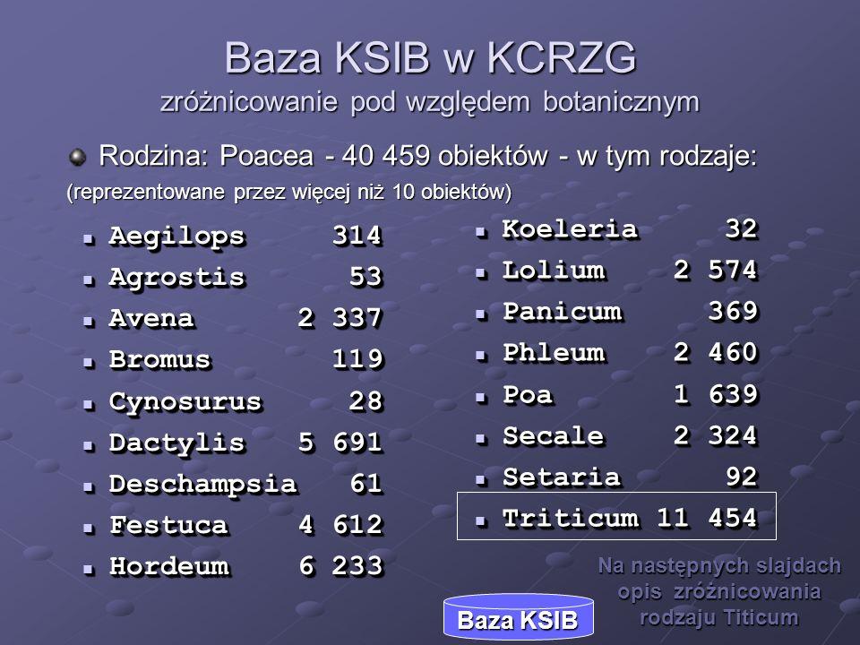 Baza KSIB w KCRZG zróżnicowanie pod względem botanicznym Aegilops 314 Aegilops 314 Agrostis 53 Agrostis 53 Avena2 337 Avena2 337 Bromus 119 Bromus 119