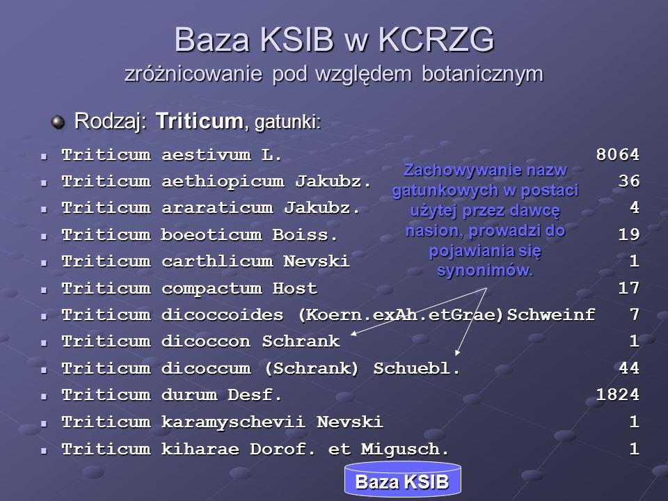 Baza KSIB w KCRZG zróżnicowanie pod względem botanicznym Triticum aestivum L. 8064 Triticum aestivum L. 8064 Triticum aethiopicum Jakubz. 36 Triticum