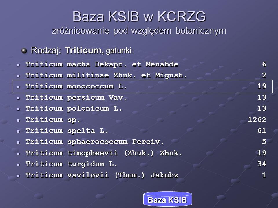 Baza KSIB w KCRZG zróżnicowanie pod względem botanicznym Rodzaj: Triticum, gatunki: Baza KSIB Triticum macha Dekapr. et Menabde 6 Triticum macha Dekap