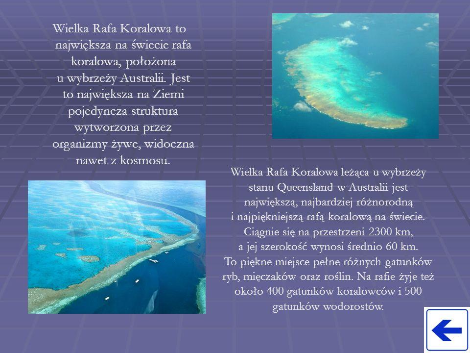 Wielka Rafa Koralowa to największa na świecie rafa koralowa, położona u wybrzeży Australii. Jest to największa na Ziemi pojedyncza struktura wytworzon